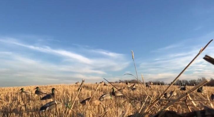 Wheatfield Last day